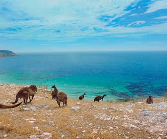 cuando viajar a australia