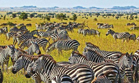 cual es la mejor epoca para viajar a Tanzania
