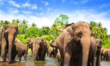 cual es la mejor epoca para viajar a Sri Lanka