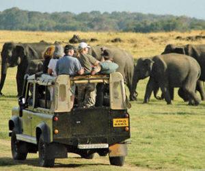 Cuando ir de Safari