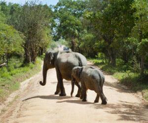 Cuando viajar de safari