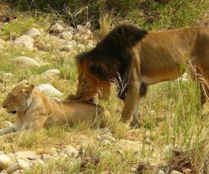 Realizar un Safari por Africa