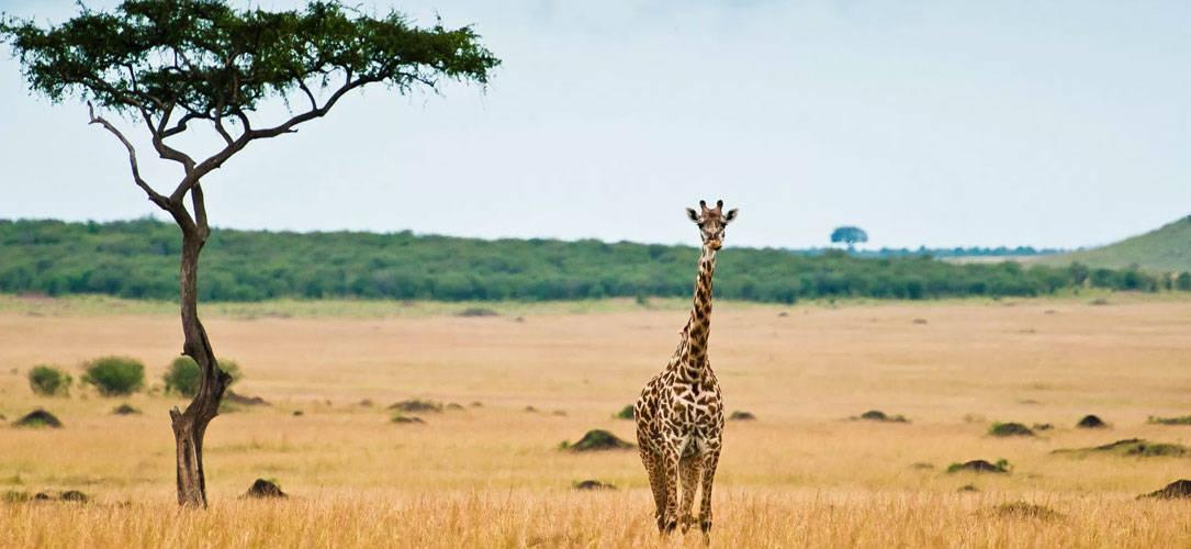 Cual es la mejor epoca para hacer un safari por áfrica