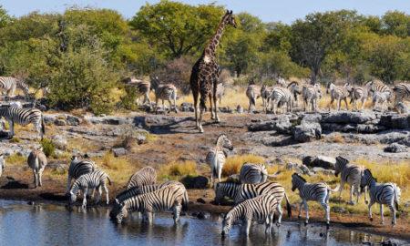 cual es la mejor epoca para viajar a namibia